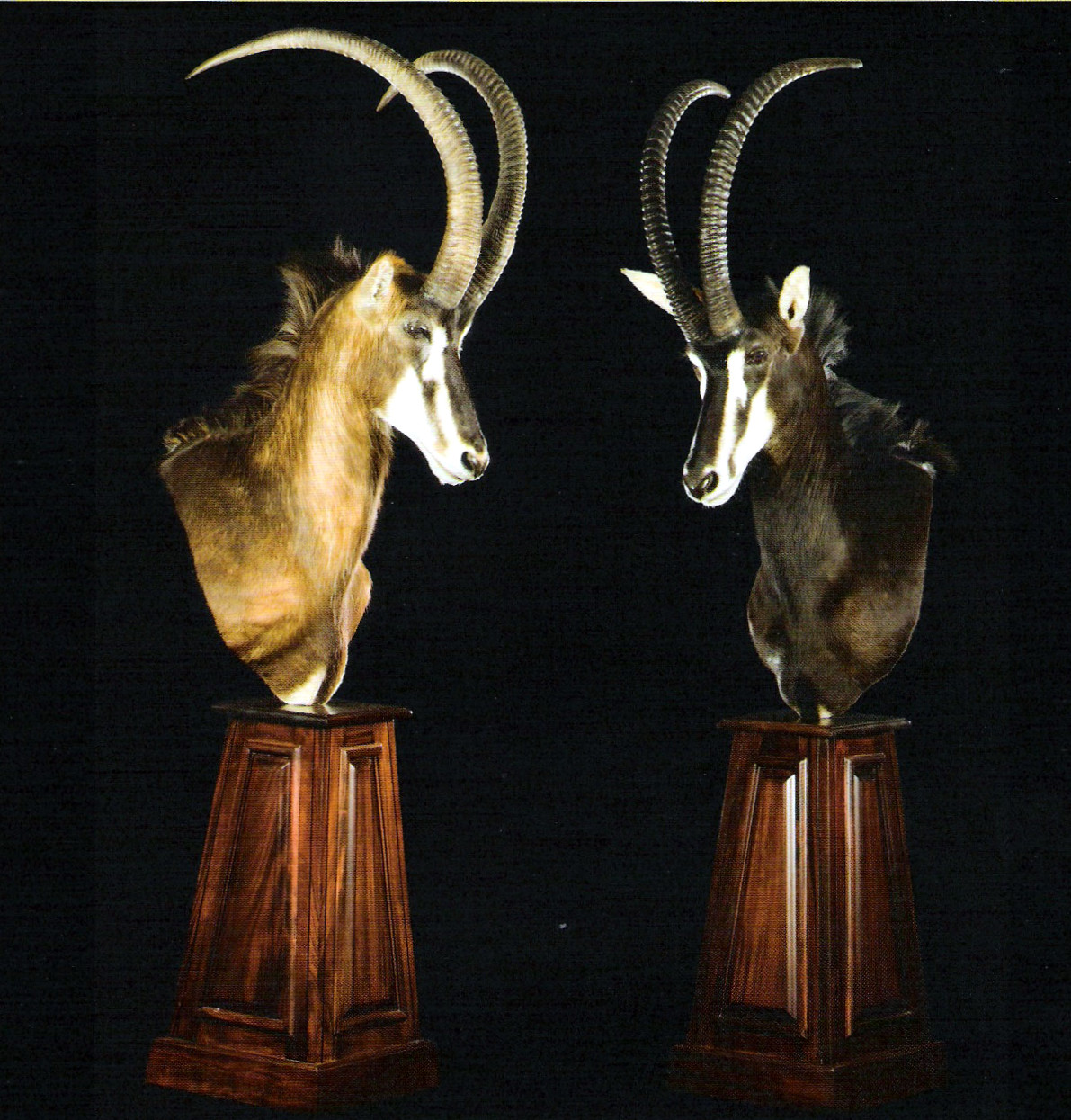Sable Pedestal Mount