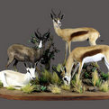 Springbok Full Mount