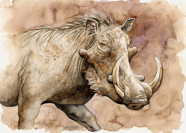 Warthog Watercolor