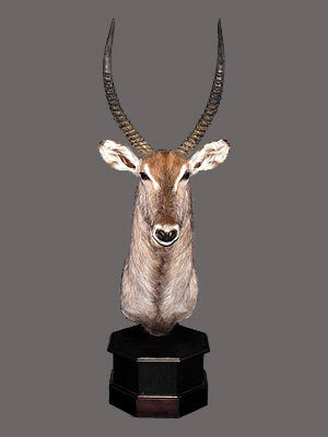 Waterbuck Pedestal Mount