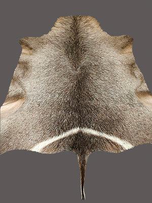 Waterbuck Rug