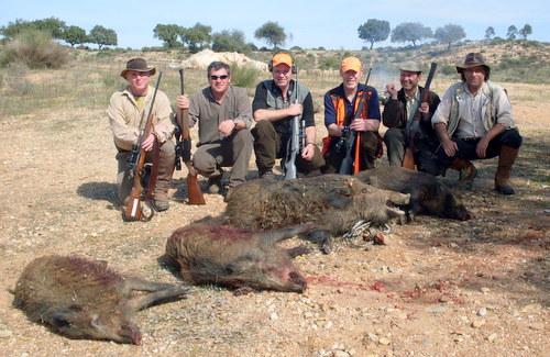 Wild Boar Trophies