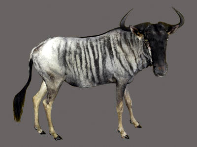 Blue Wildebeest Full Mount