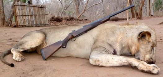 550 Magnum & Lion