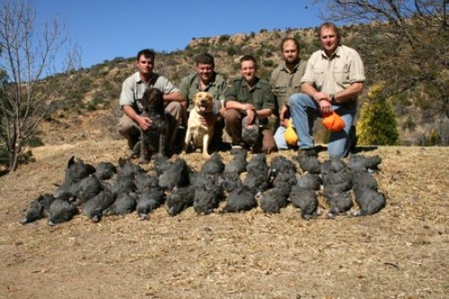 African Wing-Shooting
