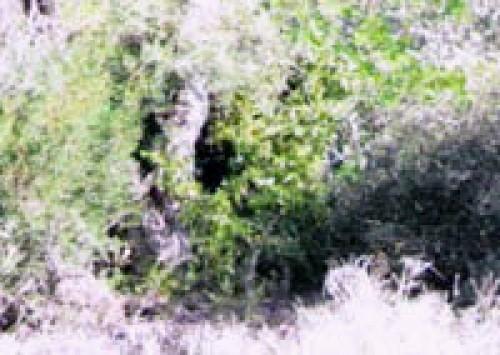Leopard Blind