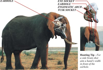 Elephant Shot Placement