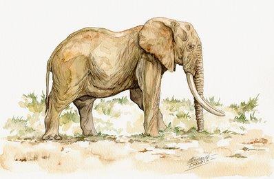 Elephant Watercolor 1