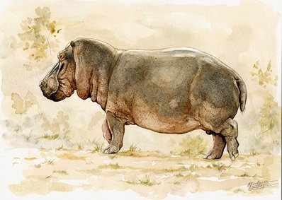 Hippo Watercolor 1