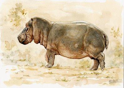 Hippo Watercolor 1