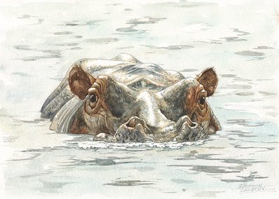 Hippo Watercolor 2