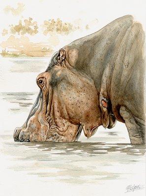 Hippo Watercolor 4