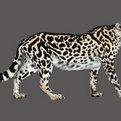 King Cheetah Full Mount
