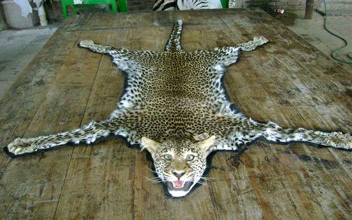 Leopard Rug Mount