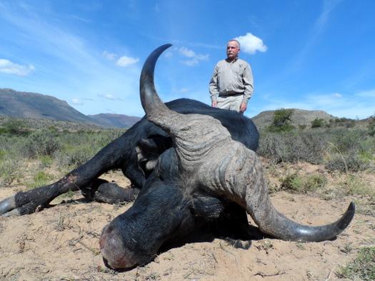 42 inch Buffalo