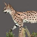 Serval Full Mount