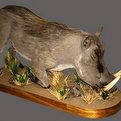 Warthog Full Mount