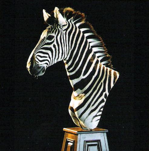 Zebra Pedestal Mount