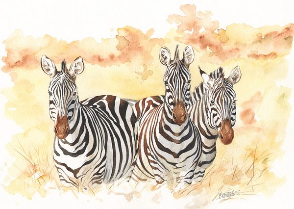 Zebra Watercolor 1