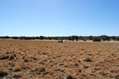 The field where we stalked on foot my warthog.  My first one in 25 years.