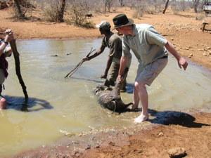Get Water Warthog